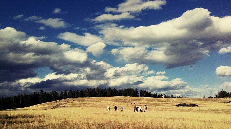 beginner-horses-guest-ranch-wyoming